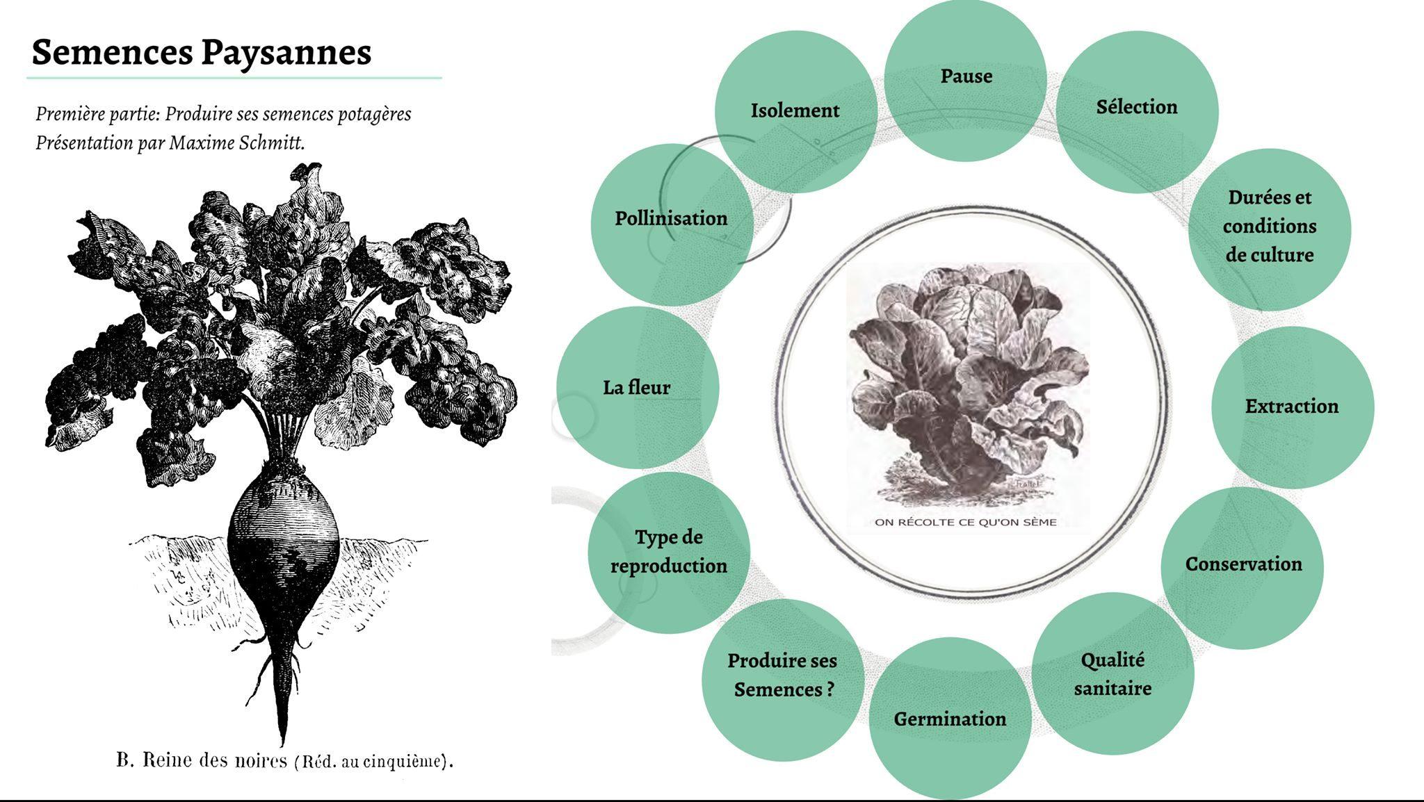 Cycle de formation « Semences paysannes »